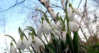 Ранняя весна - выгодная покупка набор одеял и подушек!